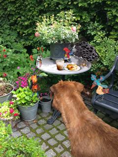 Summer-time, garden-time, tea-time, naughty-time…