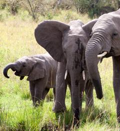 Preparing to visit the elephants in Samburu, Kenya