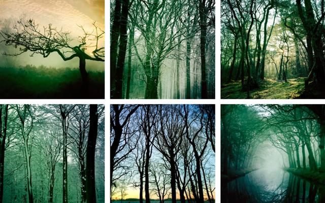 Tree silhouette Hipstas