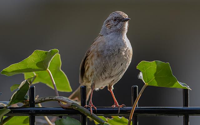 Lockdown garden birds
