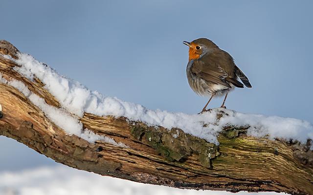 Winter time for our garden birds